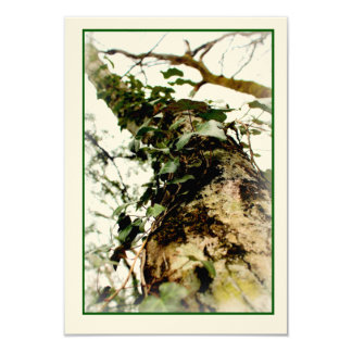 photo chart unbleached rooks natural tree trunk card