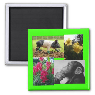 Photo collage magnet