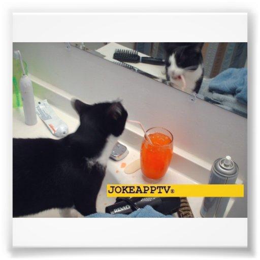 Photo de chat de la plaisanterie $$etAPP TV !