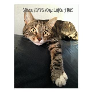 Photo de couleur de la détente de chat carte postale