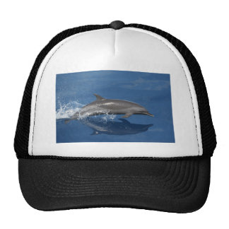 Photo de dauphin casquettes de camionneur