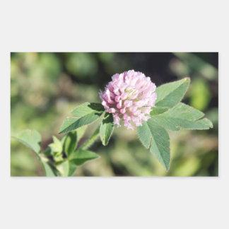 Photo de fleur sauvage de trèfle commun autocollant rectangulaire