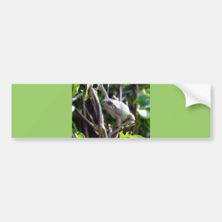 Photo de grenouille d'arbre par E.L.D. Autocollant De Voiture