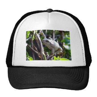 Photo de grenouille d'arbre par E.L.D. Casquettes