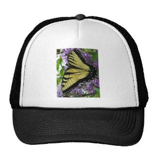 Photo de lilas de papillon de machaon de tigre casquette
