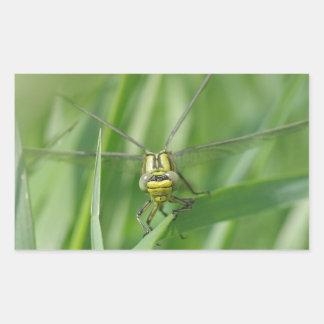 Photo de macro de libellule autocollants rectangulaires