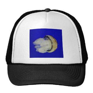 Photo de méduses casquette de camionneur