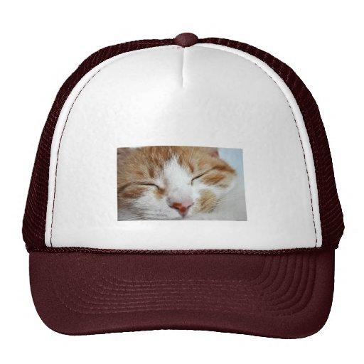 Photo de petit somme d'après-midi de chaton casquettes de camionneur