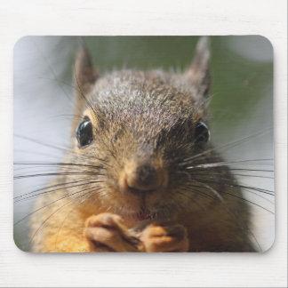 Photo de sourire d'écureuil mignon tapis de souris