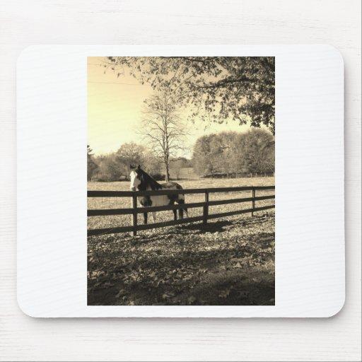 Photo de ton de sépia de cheval noir et blanc tapis de souris