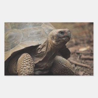 Photo de tortue sticker rectangulaire