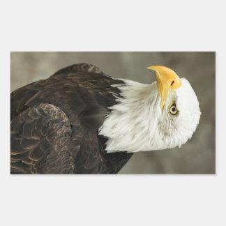 Photo d'Eagle chauve Sticker En Rectangle
