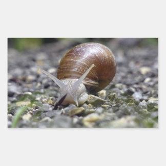 Photo d'escargot autocollants en rectangle