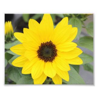 Photo Enlargement - bright yellow flower