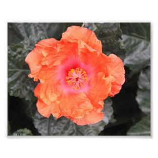 Photo Enlargement - orange and pink flower