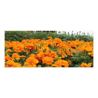 Photo Enlargement - orange flower field panorama