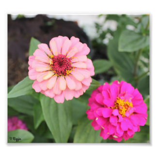Photo Enlargement - pink flower