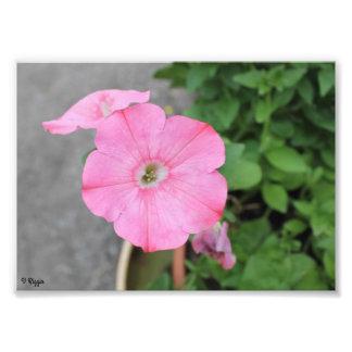 Photo Enlargement - pink round flower
