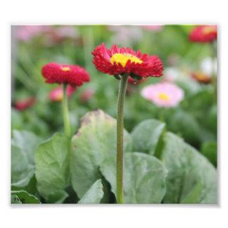 Photo Enlargement - red yellow flower closeup