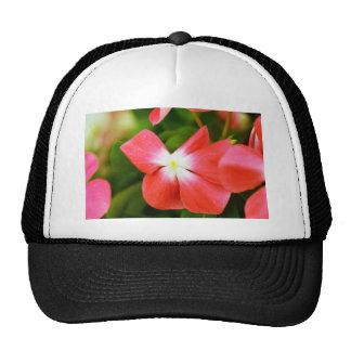 Photo florale de haute qualité (fleur rouge) casquettes de camionneur