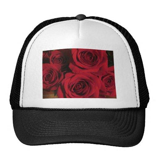 Photo florale de jardin de nature de fleurs de ros casquette