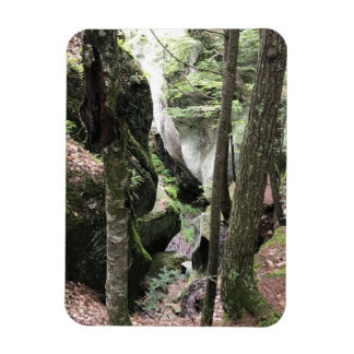 Photo magnet with beautiful picture of the woods