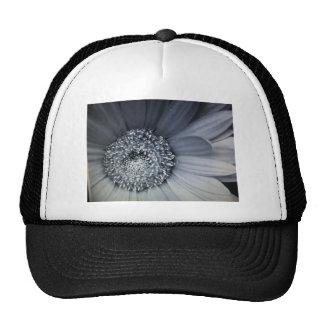 photo noire et blanche d'une fleur casquette