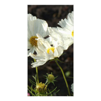 Photo of a Flower Bed of White and Gold Daisies Customized Photo Card