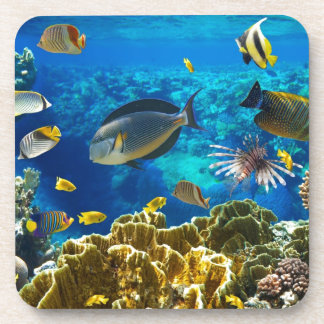 Photo of a tropical Fish on a coral reef Beverage Coaster