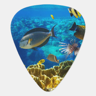 Photo of a tropical Fish on a coral reef Pick
