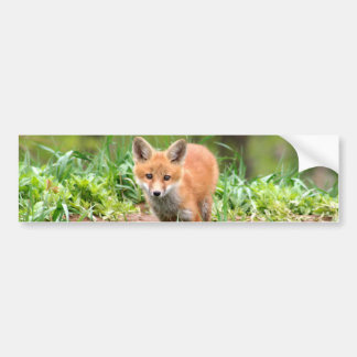 Photo of adorable red fox kit bumper sticker