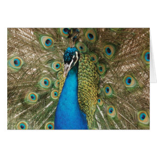 Photo of Beautiful Peacock with Spread Feathers Card