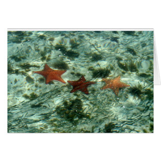 Photo of Belize Starfish Card