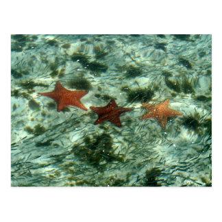 Photo of Belize Starfish Postcard
