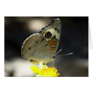 Photo of Buckeye Butterfly on a Yellow  Flower Card
