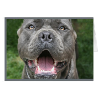 Photo of Cane Corso Card