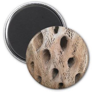 Photo of Cholla Skeleton Magnet