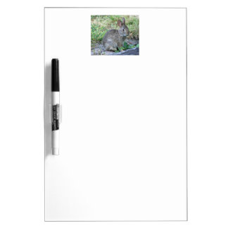 Photo of cute bunny dry erase board