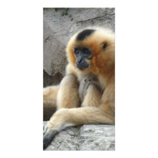 Photo of Orange and Black Gibbon Relaxing on Cliff Photo Cards