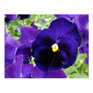 "Photo post card ""Dark blue flowers"""