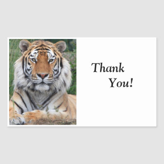 Photo principale de tigre la belle vous remercient