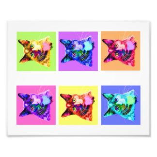 "Photo print 8x10"" rainbow/white cat portrait"