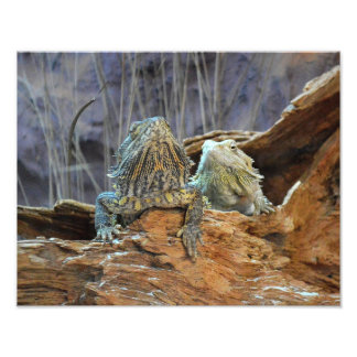Photo print with two curious lizards
