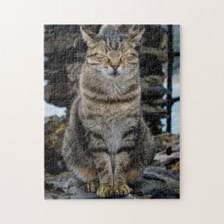 Photo Puzzle - Cat in Cinque Terre, Italy