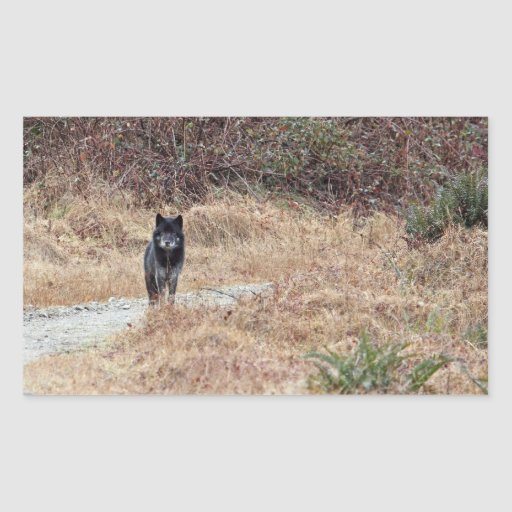 Photo sauvage de loup autocollants