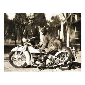 photo vintage de policier sur le puma de moto carte postale