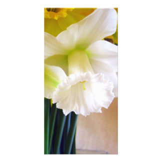 Photocard blanc de jonquille photocarte