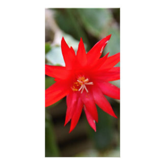 Photocard - Easter Cactus Customized Photo Card