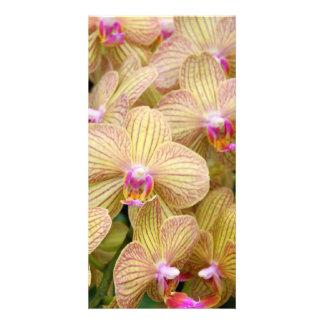 Photocard - Moth Orchid Photo Card