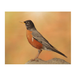 Photograph of a Robin Perched on a Rock Wood Wall Art